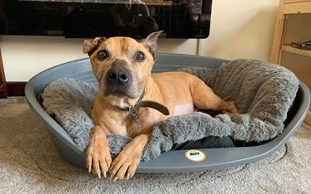Doris Banham Dog Rescue Centre